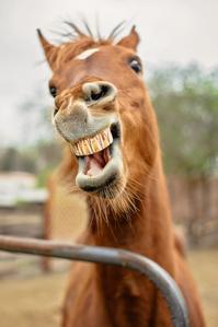 馬の歯-thumb-200x299-1000-thumb-200x299-1002