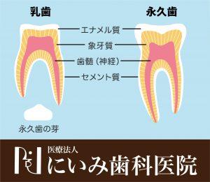 三重県四日市_にいみ歯科医院_乳歯_永久歯